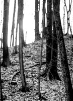 Forest for the Trees 20140115.jpg