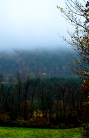 Color Under Gloom 20141022.jpg