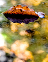 Floating Leaf 20141003.jpg