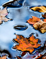 Autumn Tranquility (13th Lake Brook) 20151011.jpg